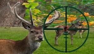 16 советов, которые помогут вам в охоте на оленя