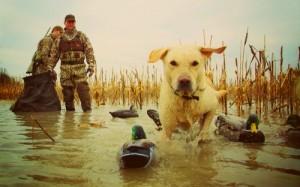 Правила весенней охоты: о чем нужно помнить?