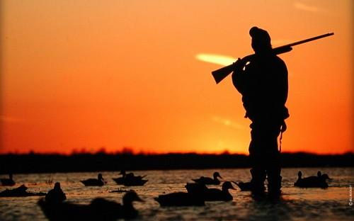 Охота по перу: что, где и как?