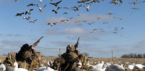 Охота на гуся в Беларуси!